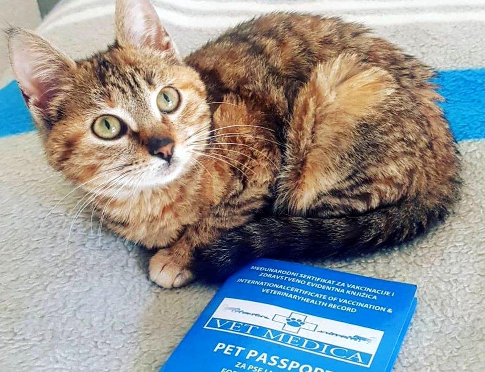 Nala has a pet passport