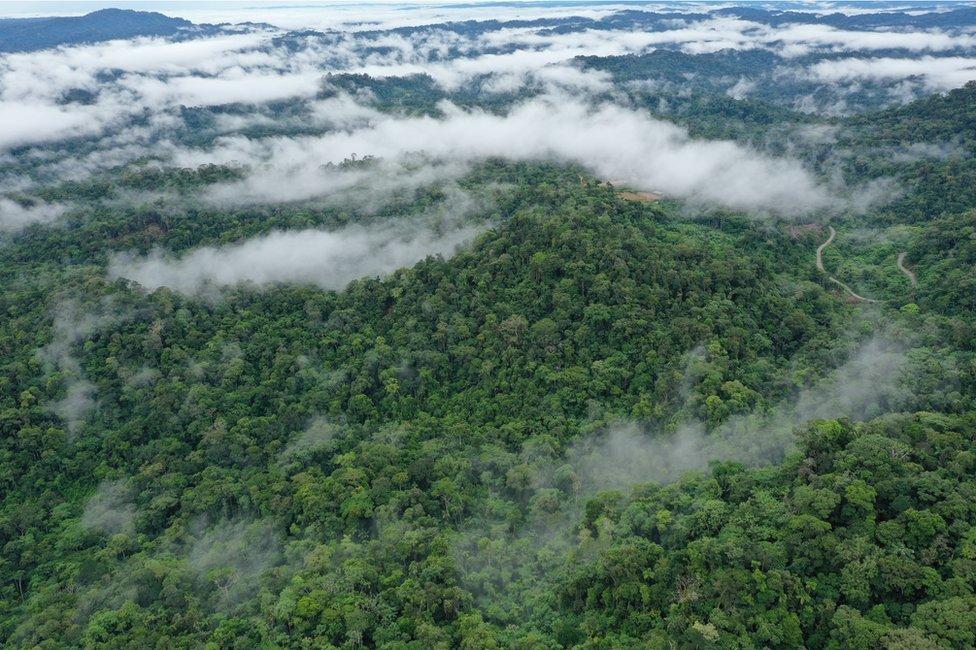 Floresta tropical no Equador