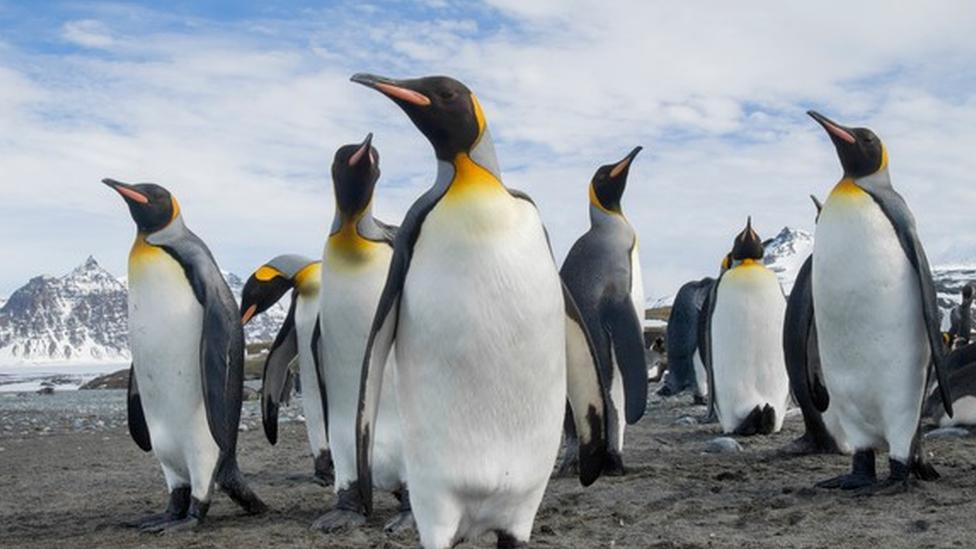 เพนกวินที่แอนตาร์กติกาขับถ่ายก๊าซหัวเราะ