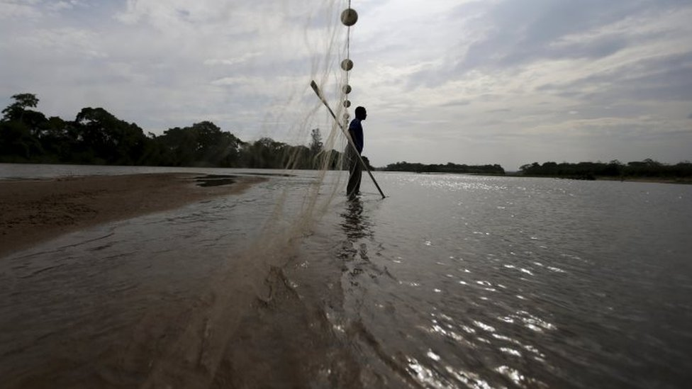 Fisherman Lucimar Souza works on the rescue of fishes in the waters of the Rio Doce (Doce River) in Linhares