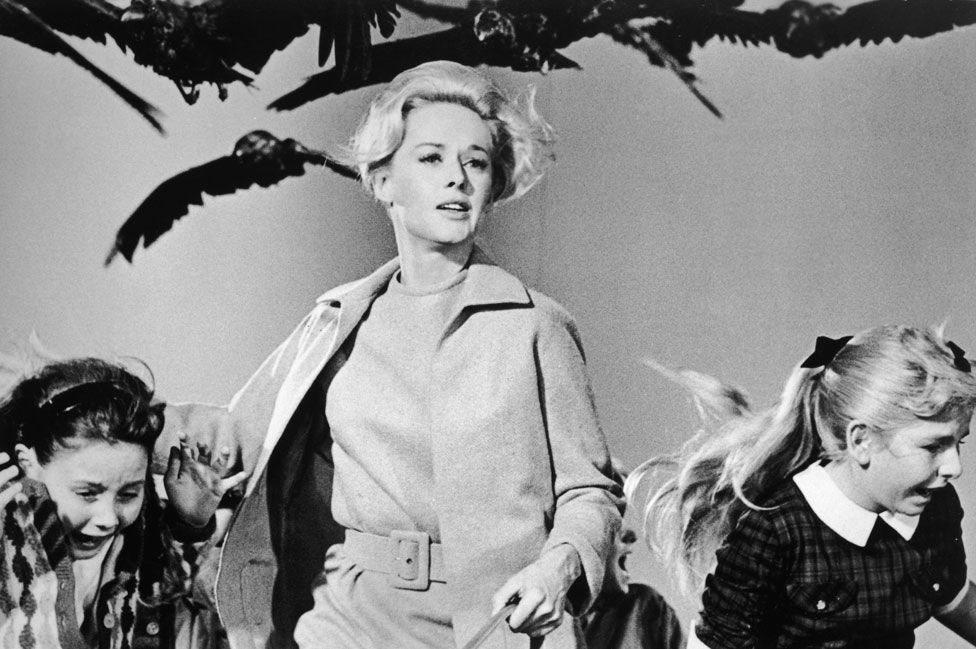هجمات الطيور نادرا ما تعيد إلى الأذهان أفلام رعب هتشكوك