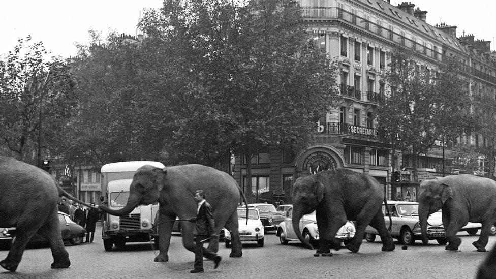 Una fila de elefantes en París