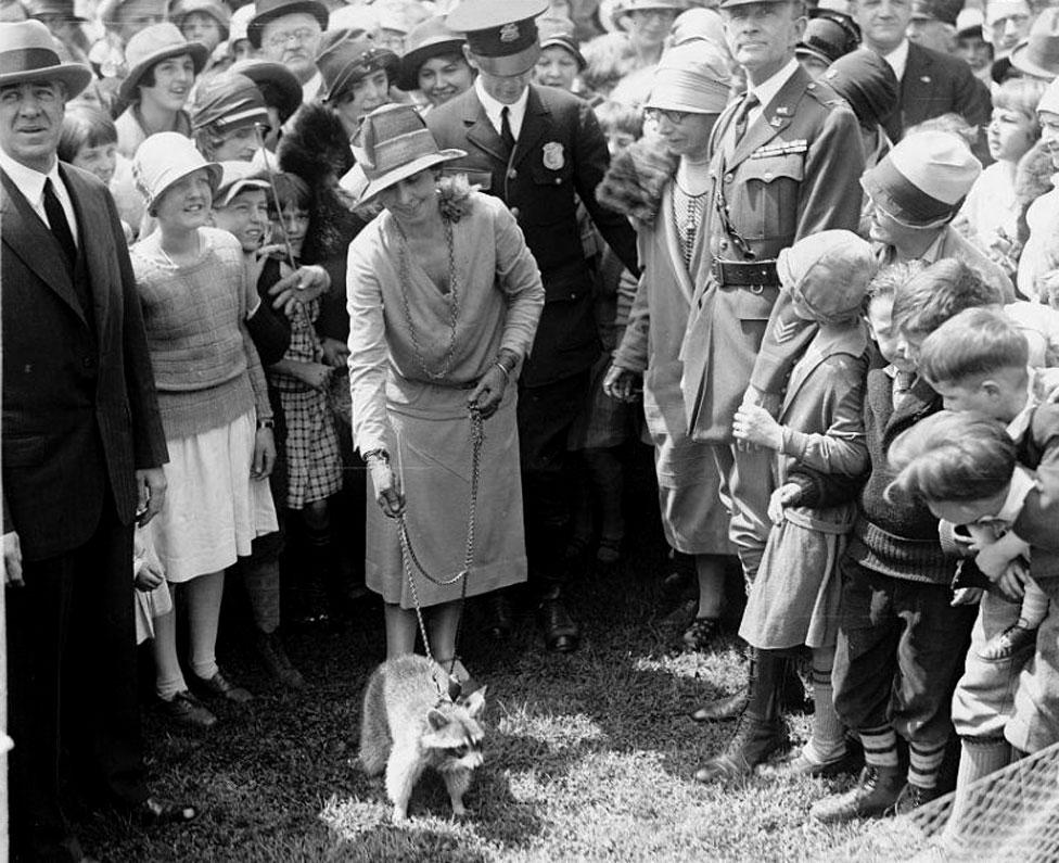 السيدة الأولى غريس كوليدج ظهرت ومعها ريبيكا من فصيل حيوان الراكون