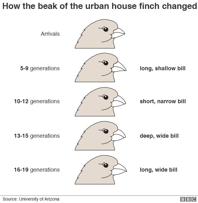 Burung Yang Memecah Kacang Dengan Bantuan Mobil Dan Cara Cara Lain Hewan Beradaptasi Dengan Kehidupan Kota Halaman 3 Tribunnews Com