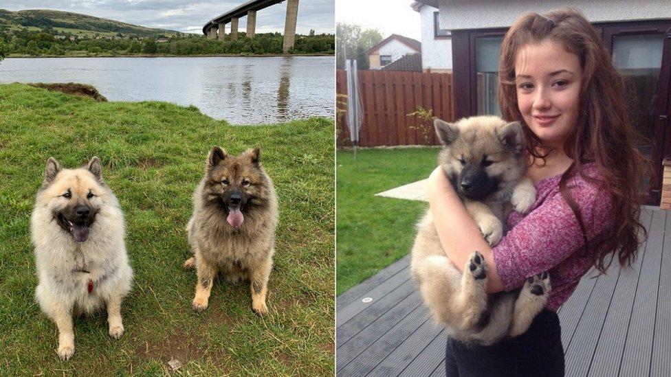 Puppy Prices Soar During Coronavirus Lockdown Bbc News