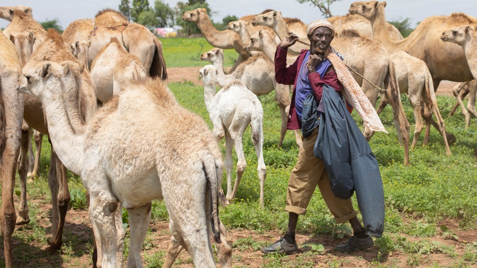 Nomadic Somali-speaking camel herders on the site of an old refugee camp in Ethiopia