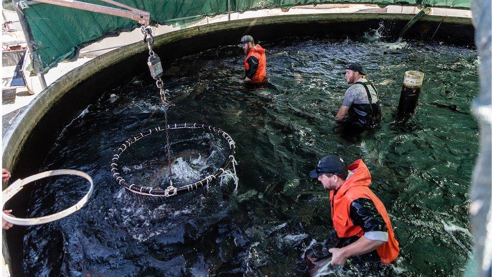 Una carga de pescado de +Sterling Caviar