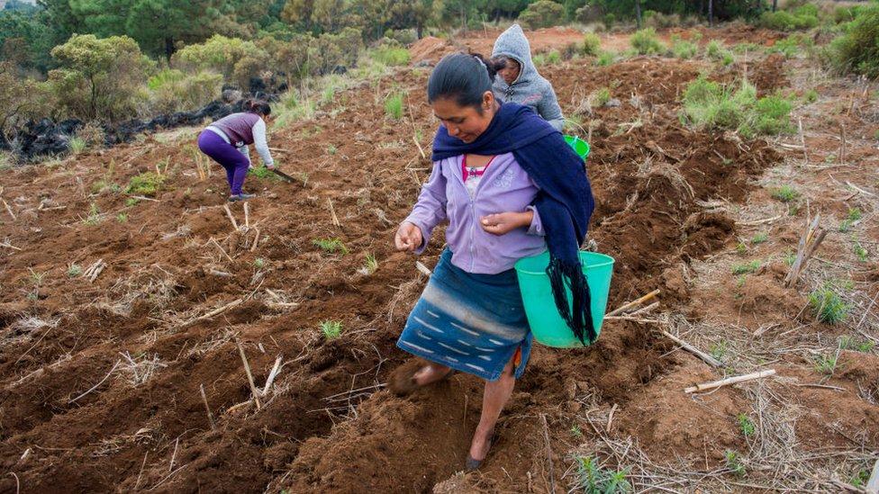 Mujeres en una zona de reforestación