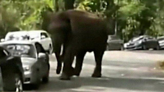 Unhappy elephant
