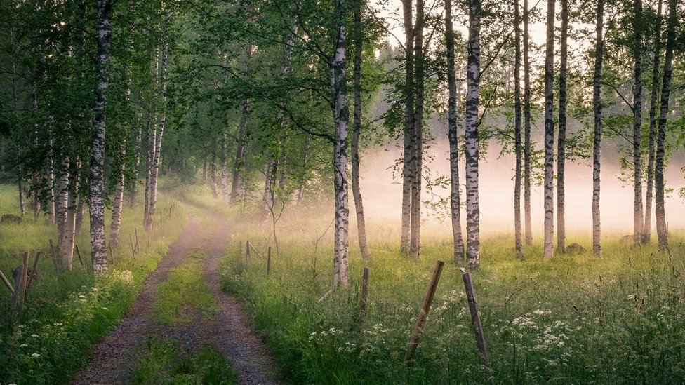 غابة وممر في داخلها