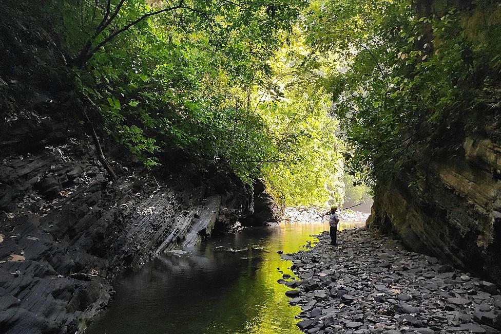 La luz del sol se filtra en la vegetación a ambos lados de un arroyo en la Serranía de las Quinchas