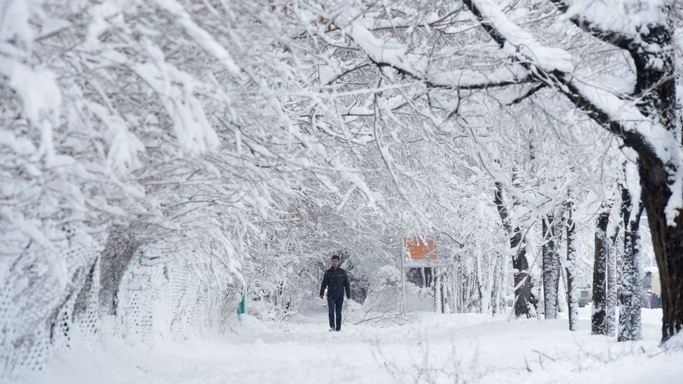An Afghan man walks along a path under snow-laden trees in Kabul, 2017