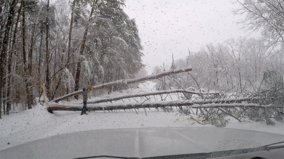 A fallen tree blocks the road in South Carolina