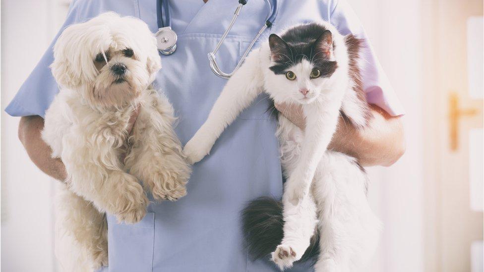 Veterinar drži mačku i psa