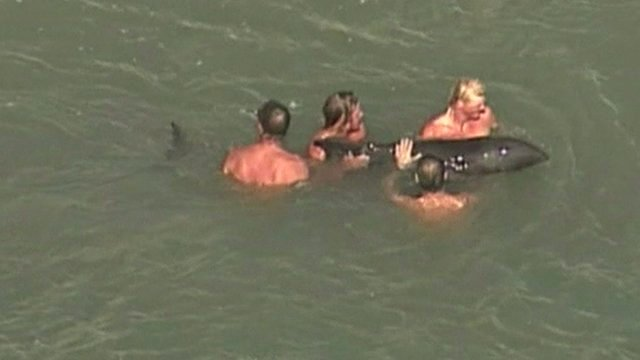Whale rescue in Florida