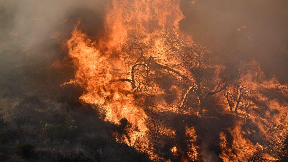 Fuego en Griffith Park, en Los Ángeles