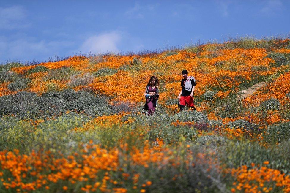 ljudi na polju divljeg maka u Kaliforniji