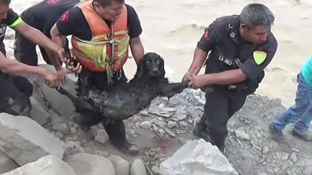Dramatic dog rescue in Peru