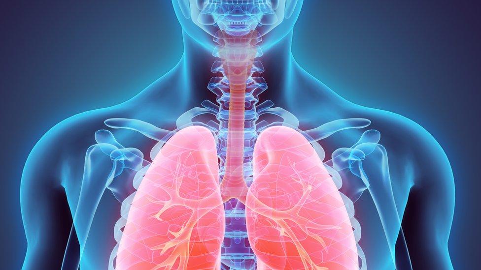 El diafragma juega un papel fundamental para realizar una respiración correcta.