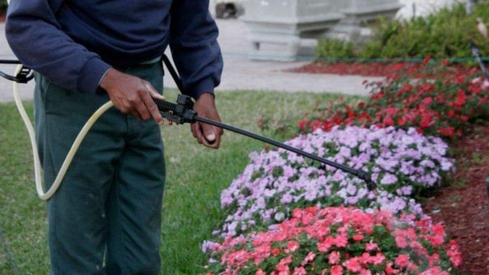 Un jardinero