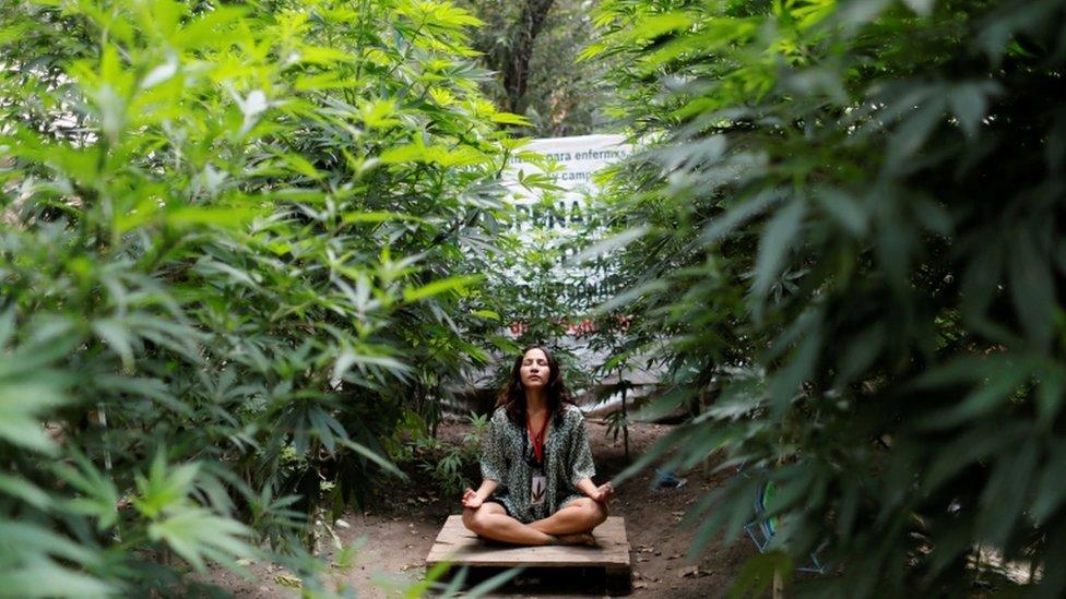A woman sits in a cannabis garden outside the Senate