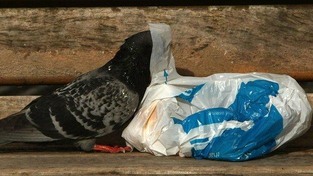 Pigeon plastic bag