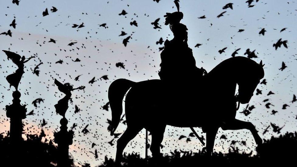 Pájaros revoloteando alrededor de una estatua