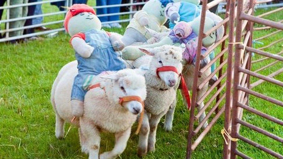 Sheep racing in Woodditton