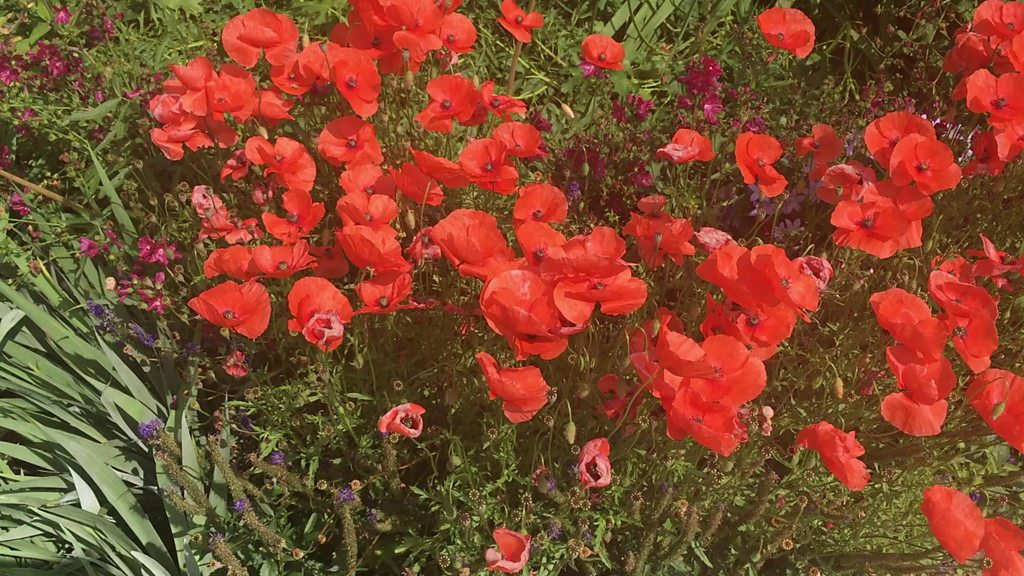 Heligan's lost gardeners remembered