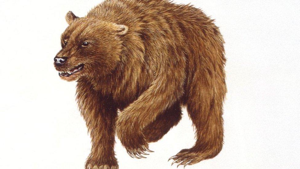 Pećinski medved - iz ruke ilustratora