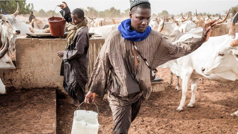 Pastores recogiendo agua en un pozo en Senegal.