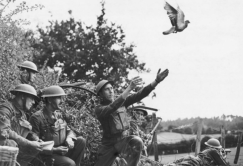 Miembros del LDV (Local Defense Volunteers) en 1940 en el noroeste de Inglaterra entrenando palomas mensajeras.