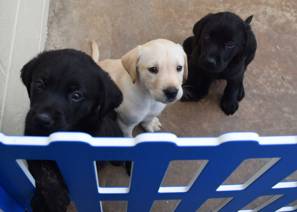 Crno-beli trio