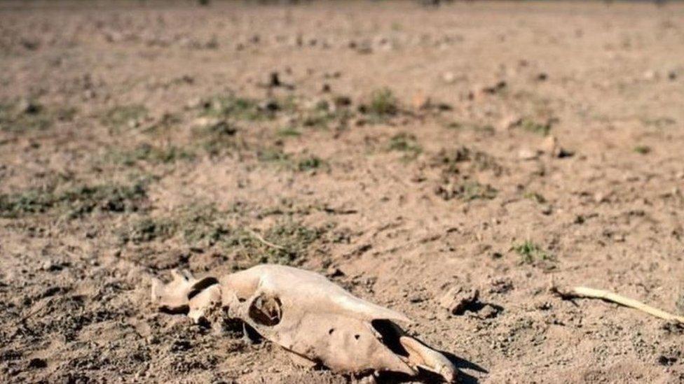 Terreno seco y cráneo de un animal