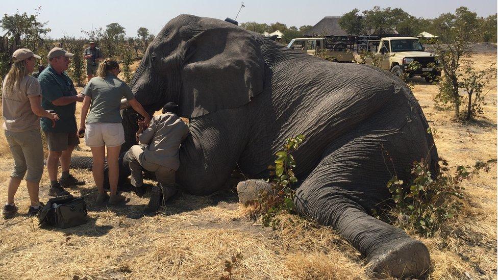 Fitting a tracker on a large elephant