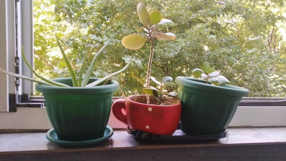 Vesna Živanović biljke 1