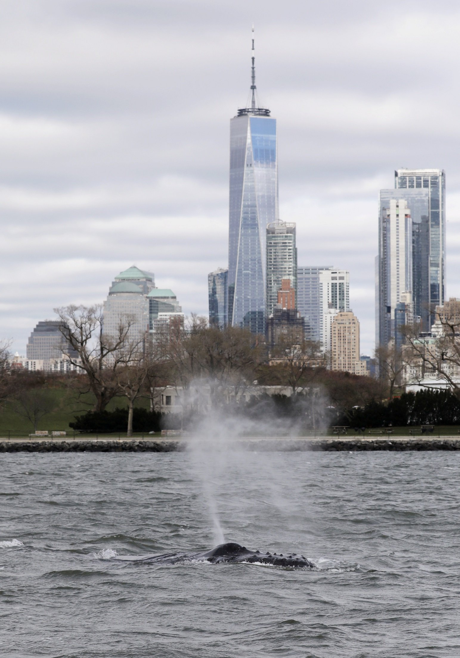 A humpback whale surfaces near One World Trade Center in this photo taken from a boat on New York Harbor in New York City, U.S., December 8, 2020