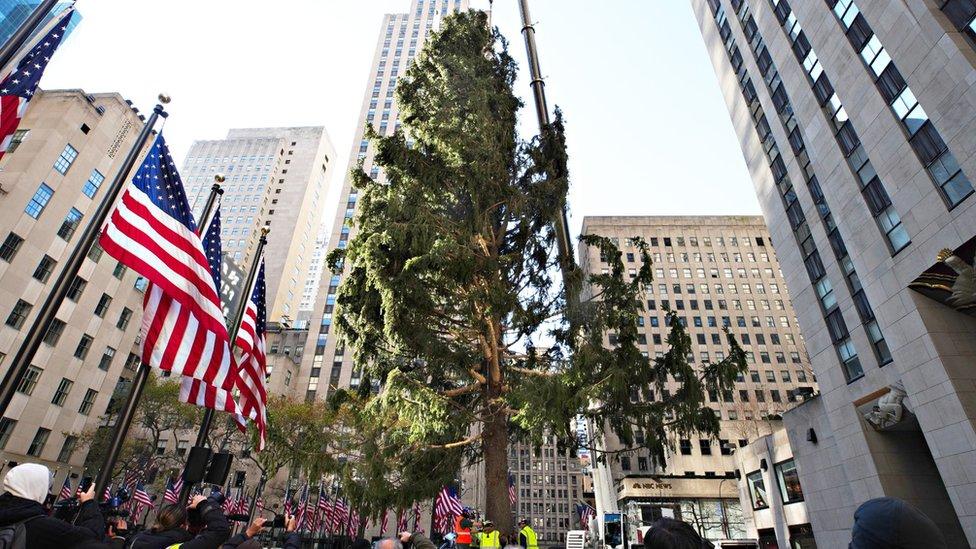Rockefeller Center's famous Christmas tree 'on brand for 2020' thumbnail