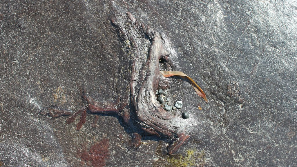 Wood preserved in intertidal peat