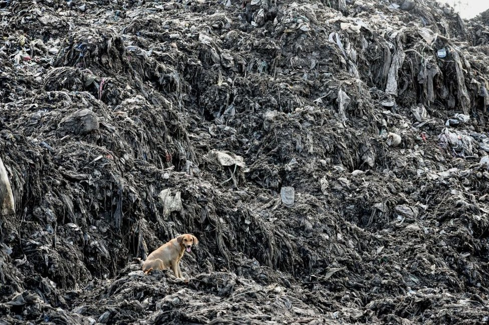 A picture taken on June 3, 2018, shows a dog siting by heaps of plastic waste at Kibarani dump site in Mombasa. On June 5, 2018 the United Nations mark the World Environment Day which plastic pollution is the main theme this year.