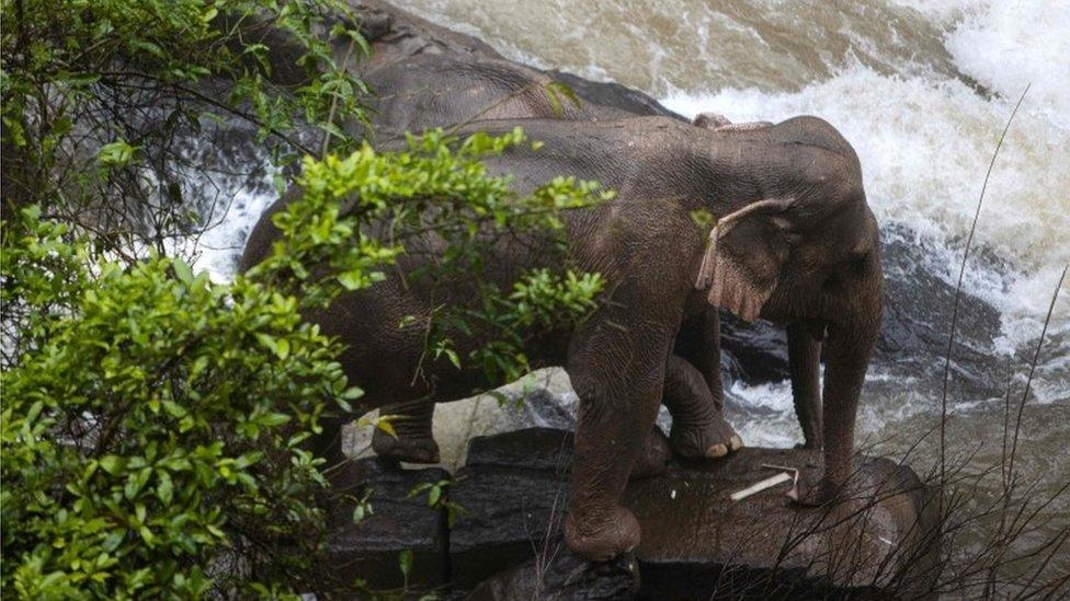 اثنان من الفيلة عالقان في قاعدة الشلال