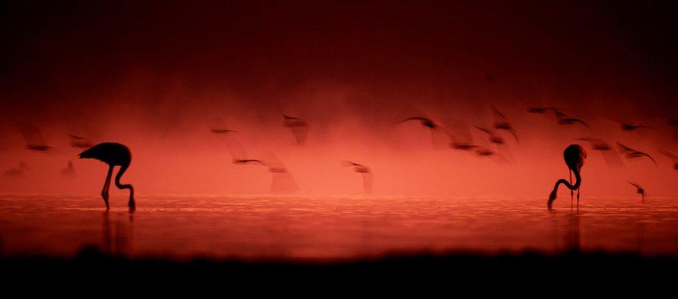 Silueta flamingosa