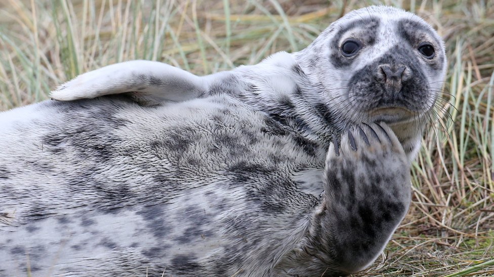A seal stares into the camera