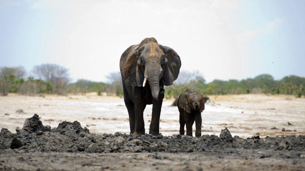 A mother elephant and her baby walk side-by-side across the open space