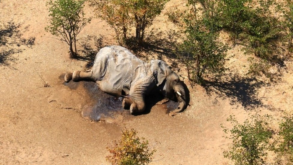 Elefante muerto en Botsuana en mayo de 2020.