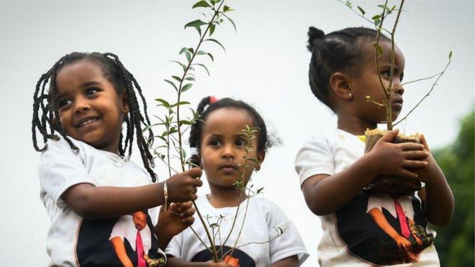 埃塞俄比亞兒童在種樹。