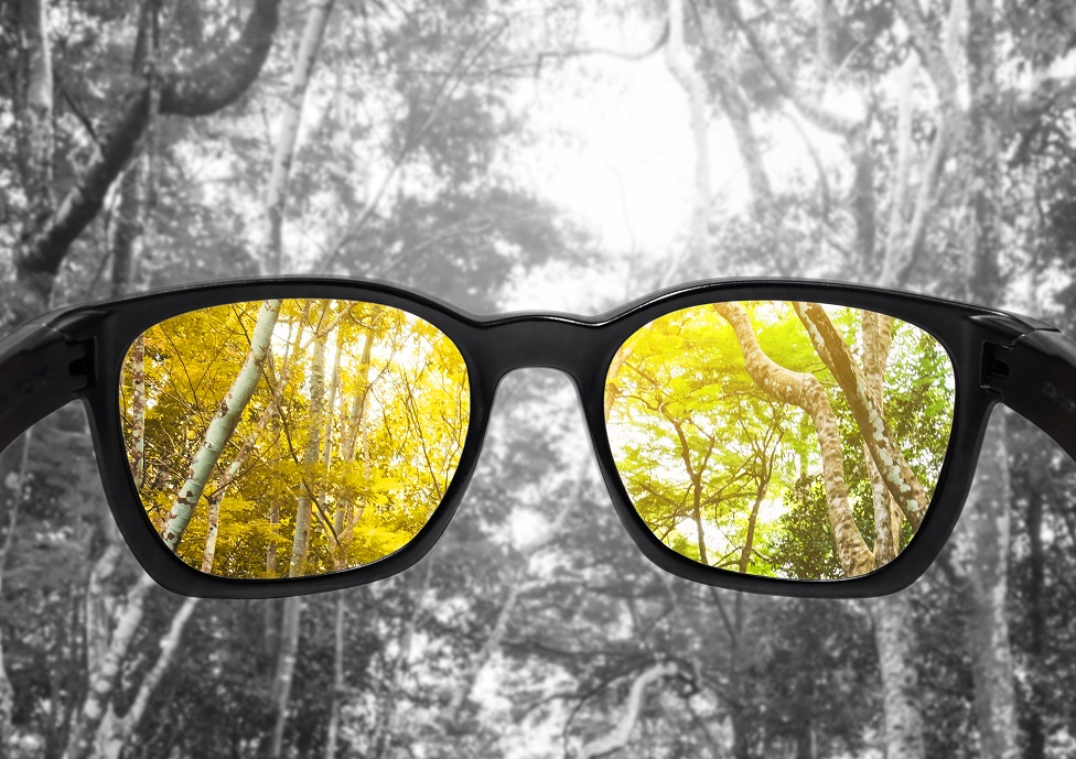 Imagen de unas lentes dirigiéndose a un bosque y visión en blanco y negro