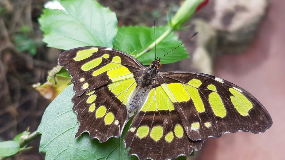 Butterfly from the farm