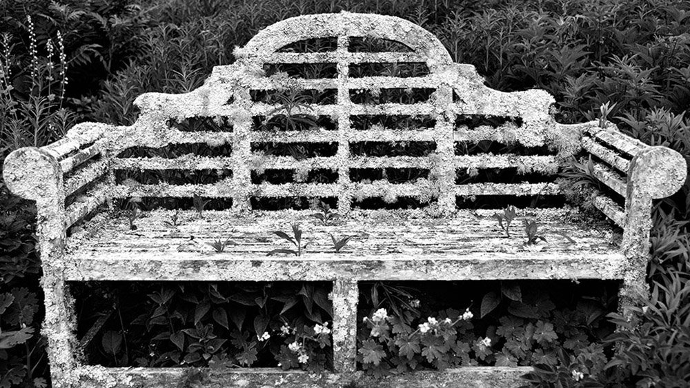 An old bench covered in lichen