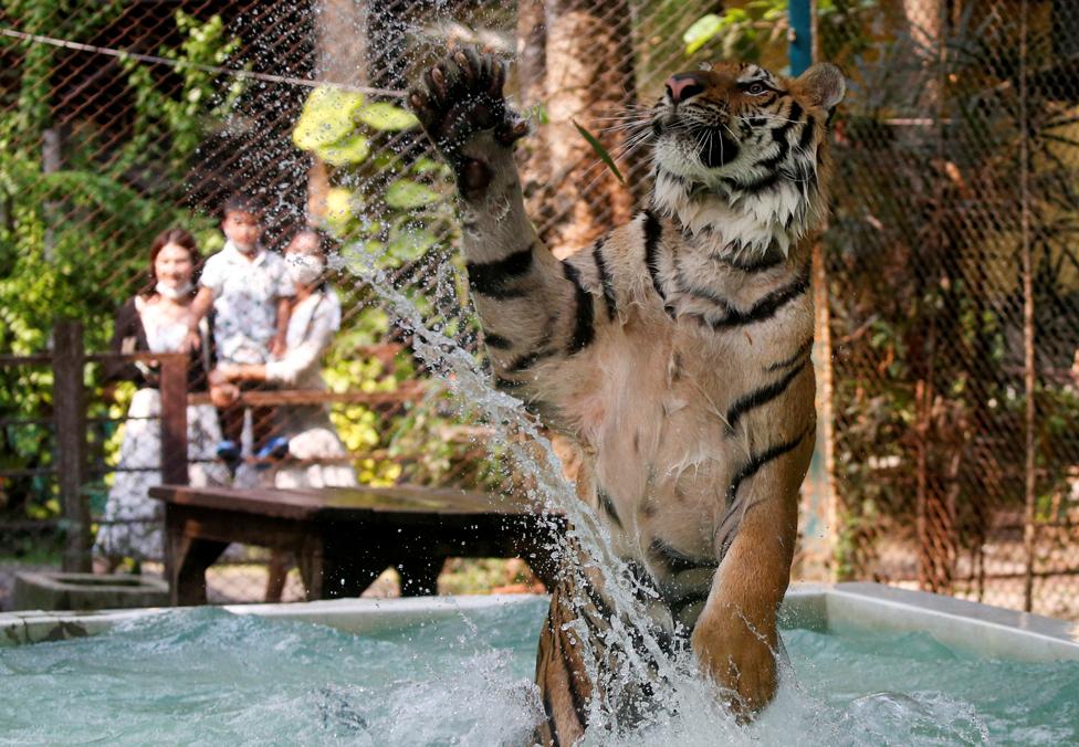 حديقة حيوان في مدينة شيانغ ماي، تايلاند.